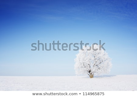 Lonely tree in a winter landscape  Stock photo © CaptureLight