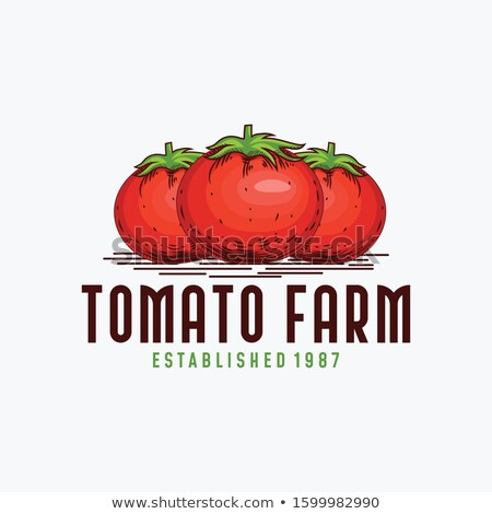 tomates · vintage · style · ligne · art · illustration - photo stock © ConceptCafe
