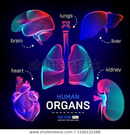 Stock fotó: Emberi · fekete · gradiens · valósághű · orvosi · illusztráció
