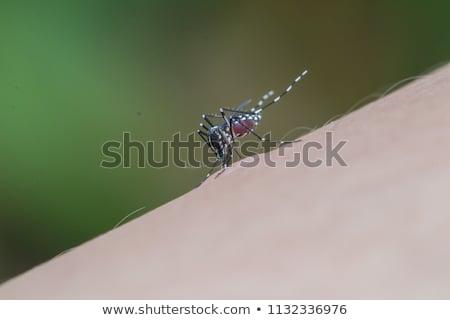 Foto stock: Mosquito · sangue · macio · foco · verão · vermelho