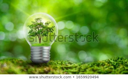 Photo stock: Arbre · vert · sécher · arbre · illustration · comparaison · deux