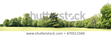 green landscape isolated white background stock photo © adamson