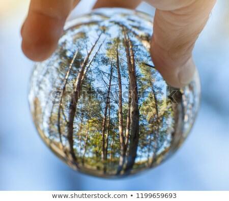 деревья стекла сфере человеческая рука экология стороны Сток-фото © lightkeeper