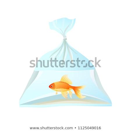 Goldfish nadar plástico bolsa cuerda de agua dulce Foto stock © robuart