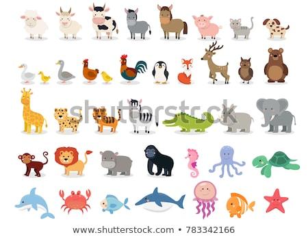 Vadállat betűk rajz szett illusztráció barátságos Stock fotó © izakowski
