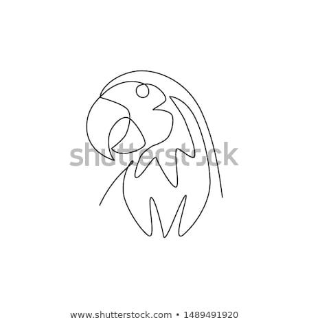 Karalama hayvan papağan doğa sanat egzersiz Stok fotoğraf © colematt