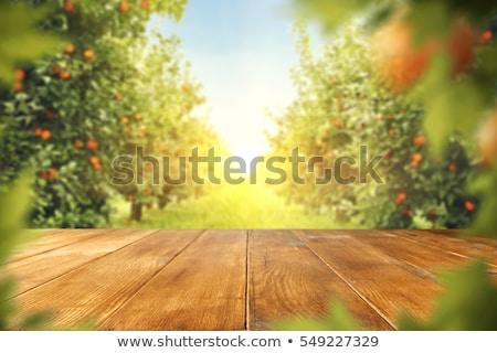 Fresh ripe tangerines on wooden board Stock photo © furmanphoto