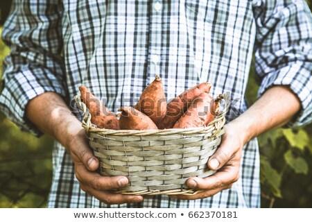 landbouwer · zoete · organisch · groenten · boeren - stockfoto © mythja