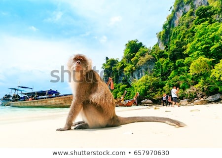 Monkeys and beach Stock photo © colematt
