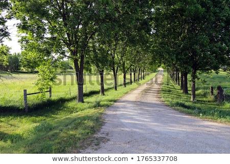 Földút buja zöld legelő vezető dombok Stock fotó © feverpitch