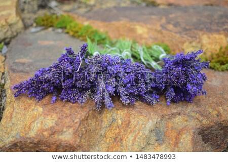 свежие · лаванды · цветы · границе · мало · ароматический - Сток-фото © x-etra