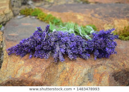 Lavanda flores rústico buquê colheita meio Foto stock © X-etra