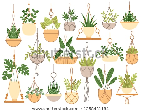 Plant Growing in Hanging Pot Botanical Decoration Stock photo © robuart