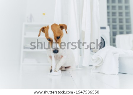 Shot of naughty dog plays with washed linen, poses on floor near clothes horse, being in laundry roo Stock photo © vkstudio