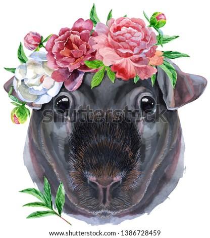 Akwarela portret chudy świnka morska wieniec Zdjęcia stock © Natalia_1947