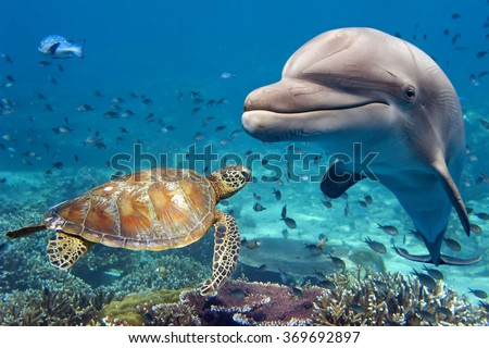 Divers scuba diving looking at sea turtle and fish under water Stock photo © Kzenon