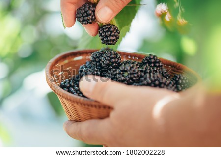 新鮮な 白 食品 自然 背景 ストックフォト © bdspn