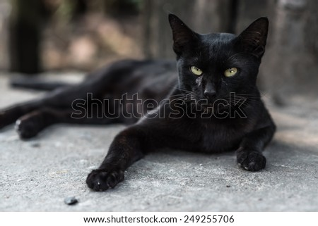 cute · chat · seuls · Maine · blanche · animaux - photo stock © popaukropa
