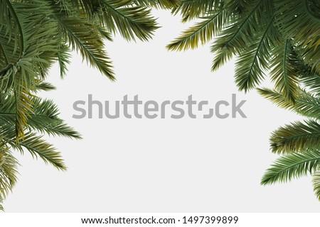 Zielone liści palmowych organiczny Kokosowe niebieski rogu Zdjęcia stock © artjazz