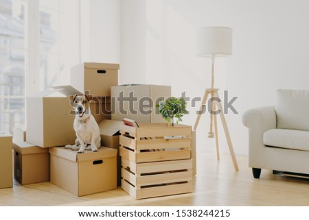 Animals, relocation and moving concept. Small pedigree dog poses on pile of carton boxes with person Stock photo © vkstudio