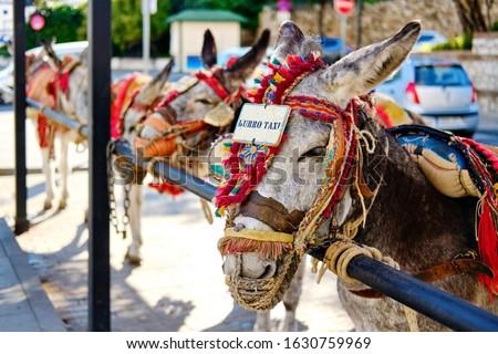 Burro táxi ponto de referência espanhol aldeia espera Foto stock © amok