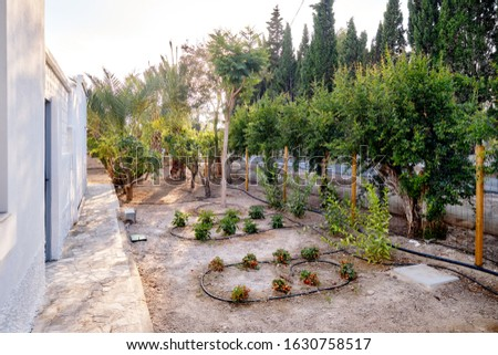 Small private garden where growing tomatoes cheery behind the re Stock photo © amok