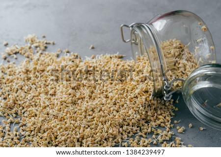 Horizontal shot of buckwheat sprouts in glass jar on grey background. Eco nutrition. Fitness and die Stock photo © vkstudio
