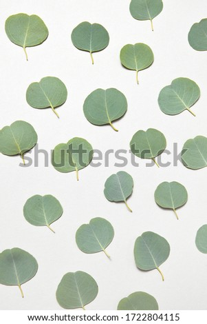 Vertical pattern from small leaves of Eucalyptus on a light grey background. Stock photo © artjazz