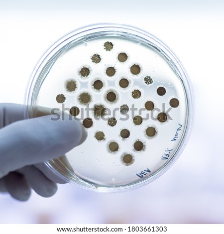 Scientistr growing infectious viruses or bacteria on petri dish  Stock photo © lovleah