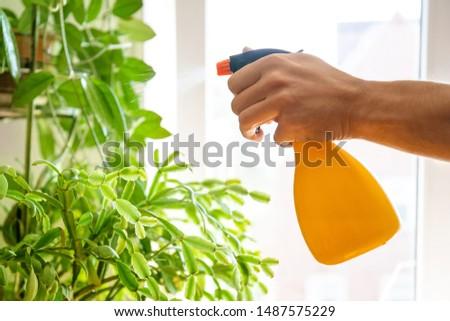 man watering houseplants at home Stock photo © dolgachov