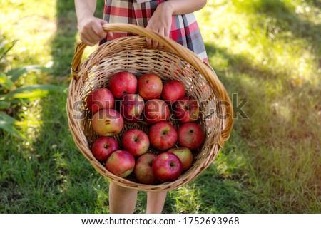 девушки яблоки плетеный корзины осень парка Сток-фото © dolgachov