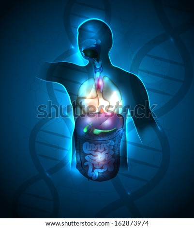 Máj anatómia absztrakt kék tudományos DNS Stock fotó © Tefi