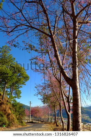 Photo Of Beautiful Blooming Tree With Wonderful Small Pink Flowe Foto stock © xuanhuongho