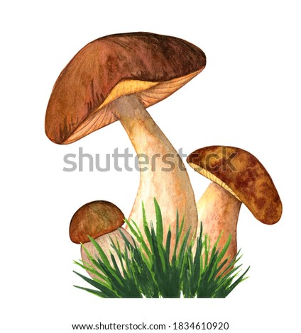Champignon on white background. Watercolor illustration Stock photo © ConceptCafe