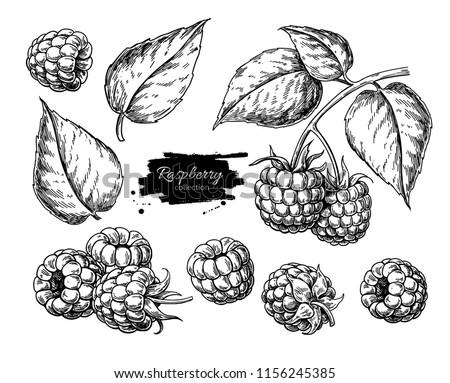 Framboos geïsoleerd witte schets stijl Stockfoto © balasoiu