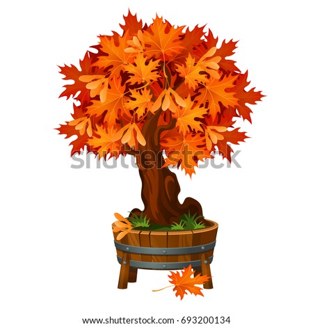 Bonsai maple tree in a wooden tub or flowerpot isolated on white background. Deciduous tree, the sym Stock photo © Lady-Luck