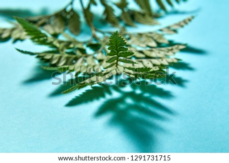 macro photo of fern leaves with shadow pattern on a blue background with space for text natural bac stock photo © artjazz