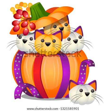 Citrouille forme faible chatons isolé Photo stock © Lady-Luck