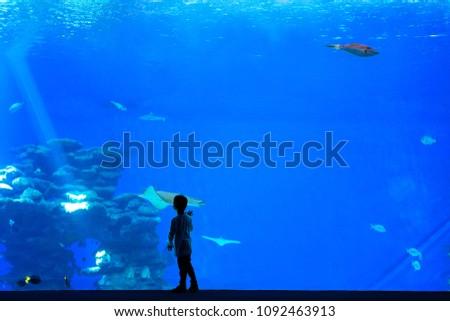Stock fotó: Little Boy Kid Watching The Shoal Of Fish Swimming In Oceanarium Children Enjoying Underwater Life