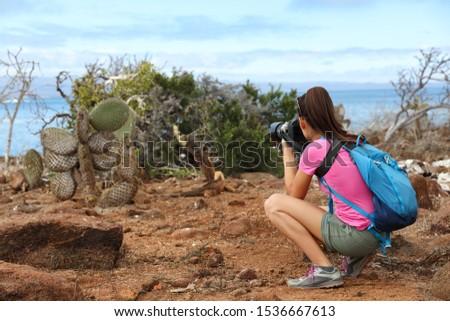 Zwierząt gruntów iguana jedzenie na północ Zdjęcia stock © Maridav