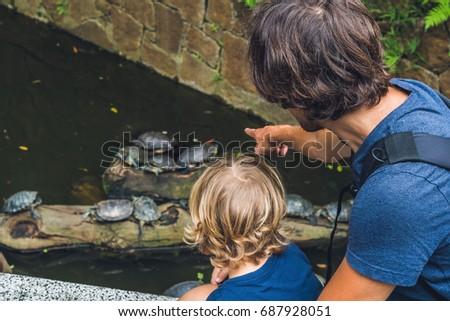 Baba oğul bakmak su kaplumbağalar yüzmek gölet Stok fotoğraf © galitskaya