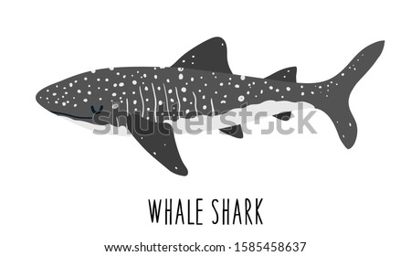 Whale shark. Big dangerous marine predator. Underwater sea animal. Vector illustration of Marine wil Stock photo © designer_things