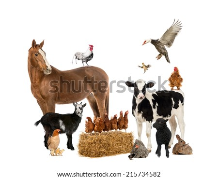 Group of domestic animals in a farm isolated Stock photo © bluering