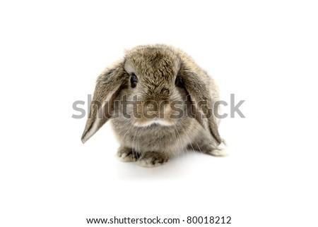çok güzel beş hafta eski bebek tavşan Stok fotoğraf © pixelmemoirs