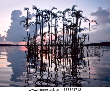 Amazóniai esőerdő park természet tájkép tó Stock fotó © xura
