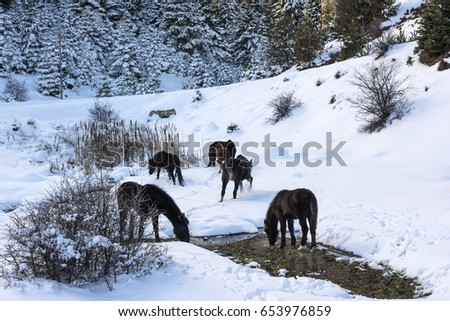 black free horses at ziria mountain fir trees covered with snow on a winter day south peloponnese stock photo © ankarb