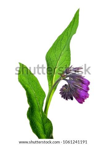 цветок используемый органический медицина весны медицинской Сток-фото © Virgin
