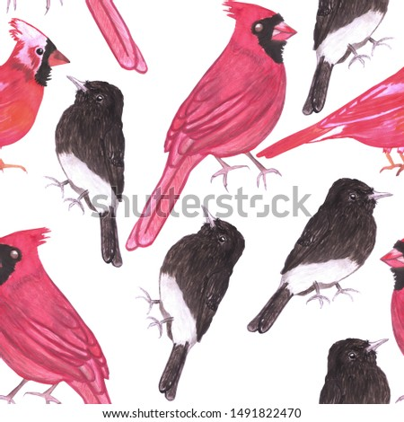 Cardinals and black phoebe seamless watercolor repeat background Stock photo © shawlinmohd