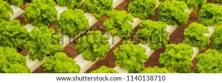 Szalag hosszú formátum friss néz friss zöldségek Stock fotó © galitskaya