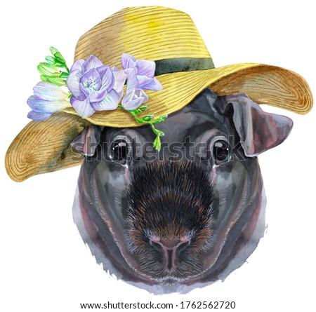 Akwarela portret chudy świnka morska lata hat Zdjęcia stock © Natalia_1947